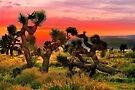 Joshua Trees  by LudaNayvelt