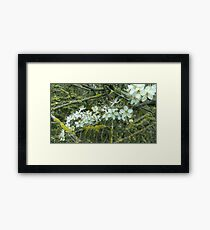 Decayed Blossom Framed Print