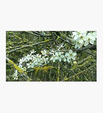 Decayed Blossom Photographic Print