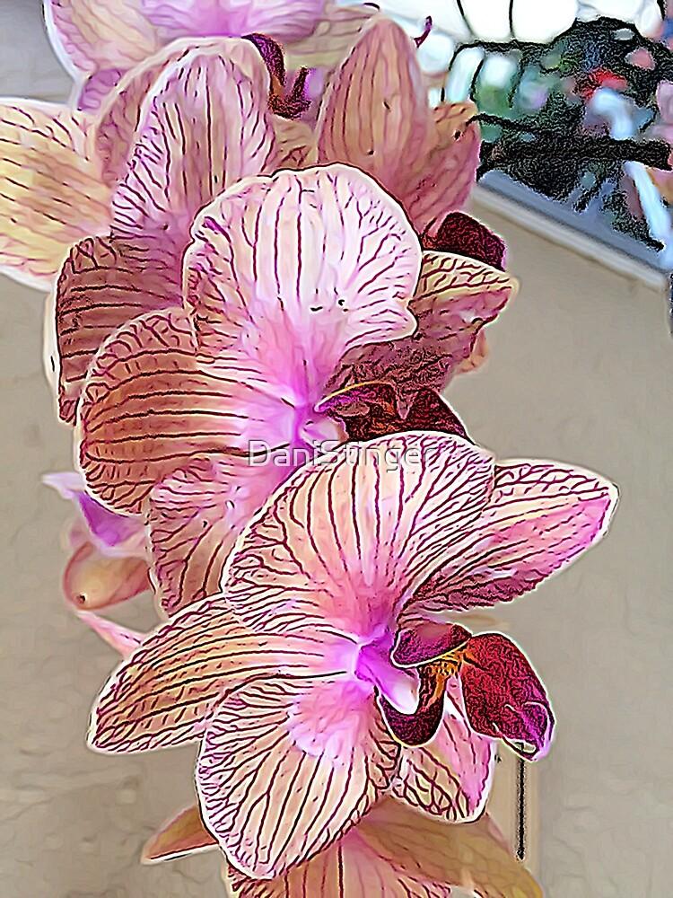 Phalaenopsis I by DaniStinger