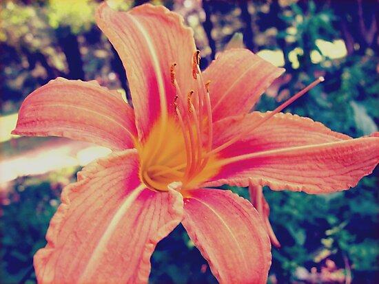 Tiger Lily by SaradaBoru