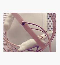 Cute Mice Photographic Print