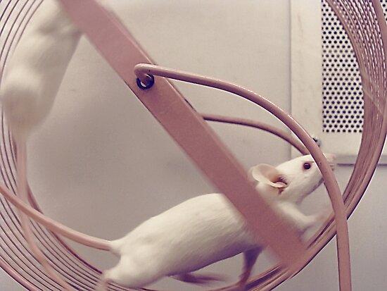 Cute Mice by SaradaBoru