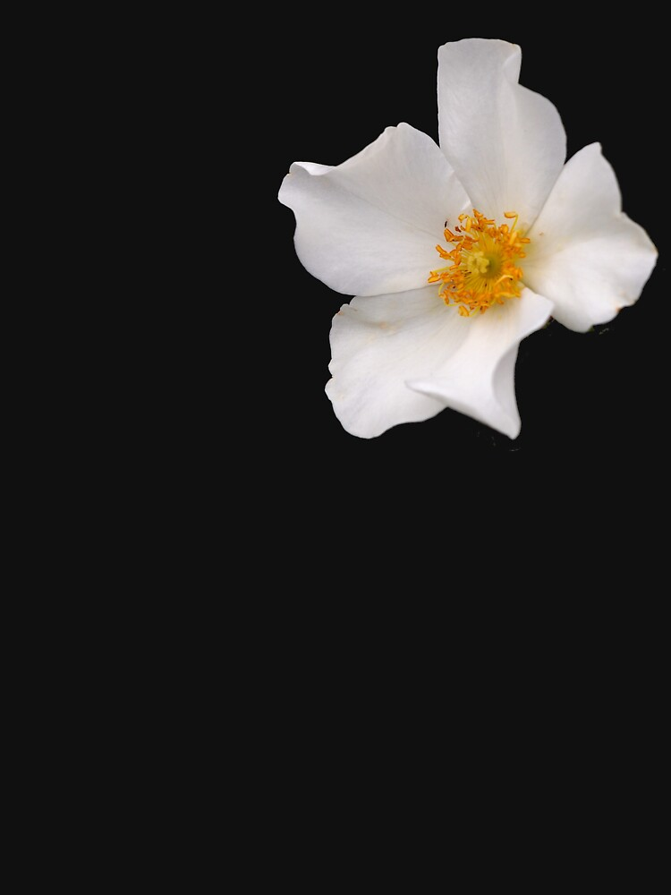California Winter Rose by douglasewelch