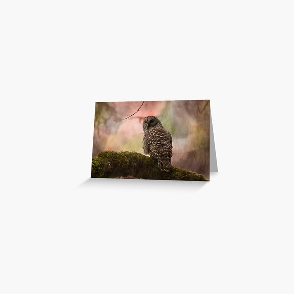 Barred Owl on a Mossy Branch Artistic  Greeting Card