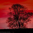 Tree at sunset  by bywhacky