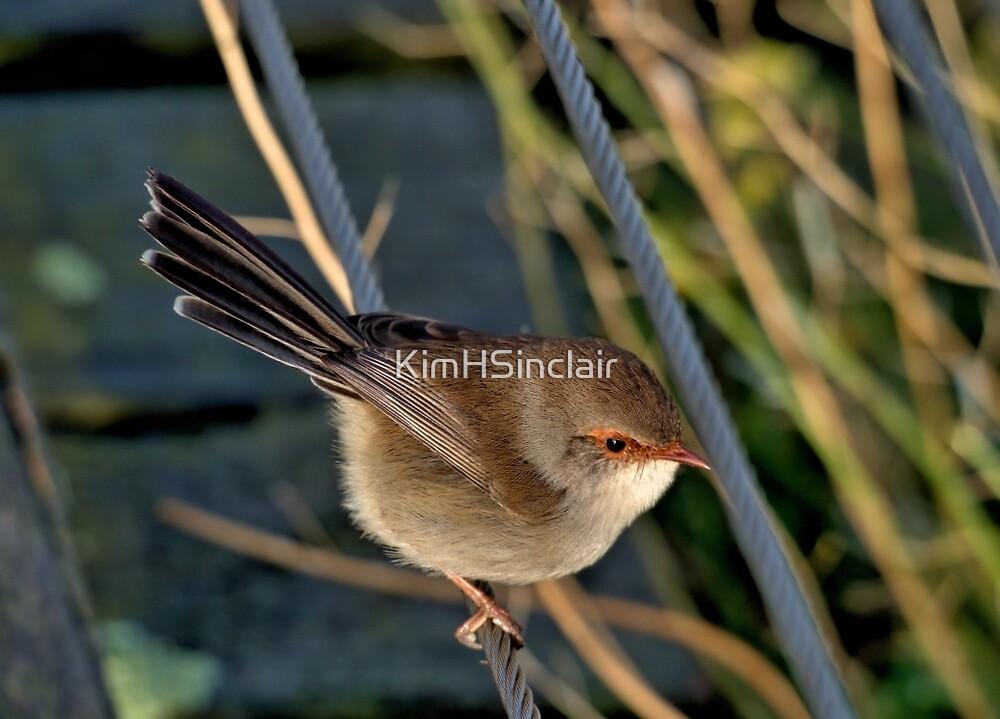 Bird on a wire by KimHSinclair