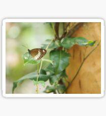 Butterfly on a Leaf Sticker