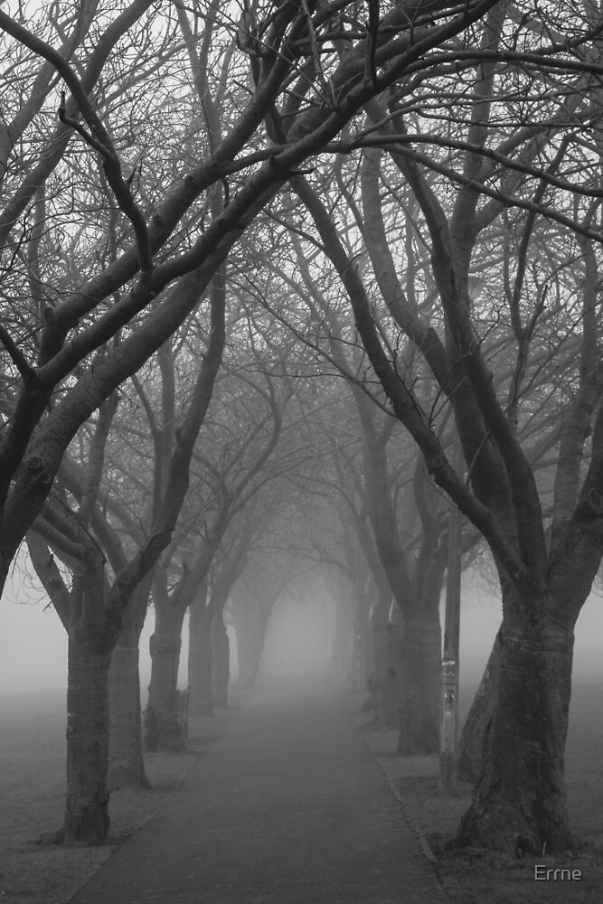 Foggy Path by Errne