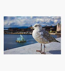 Modern Seagul Photographic Print
