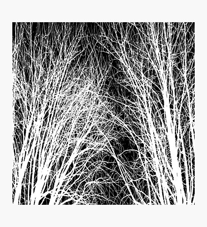 Comely trees 1 Photographic Print