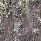 Lichen on fencepost 2 by Jack Bridges