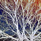 Wintry Mix - Colorful Sky & Shocking White Branches by ArtCreationist