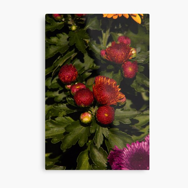 Colorful Flowers 17 Metal Print