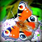 Peacock butterfly on Buddleia by ©The Creative  Minds