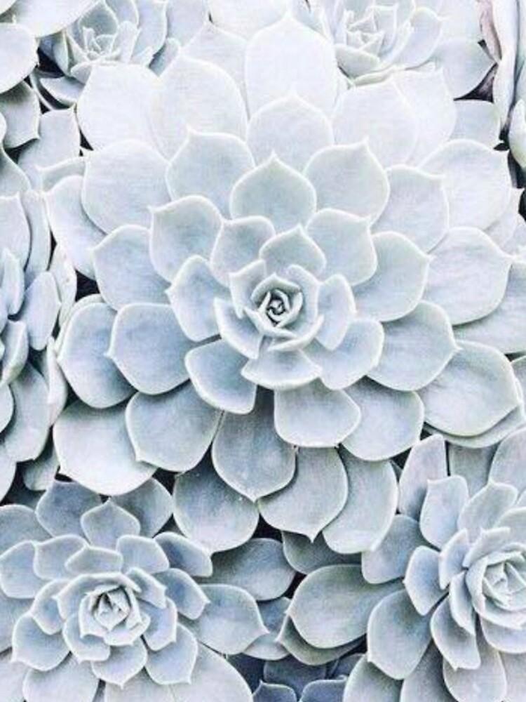 Kaktus von Rooss