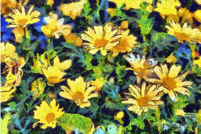 Vinny's daisies by Photos by Healy