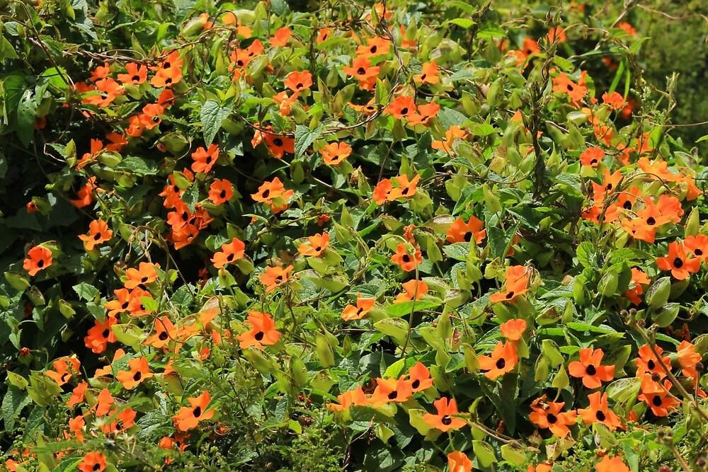 Orange Wildflowers on a Bush by rhamm