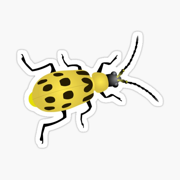 Cucumber Beetle Sticker