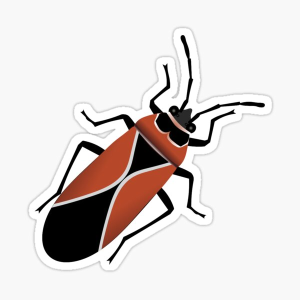White Crossed Seed Bug Sticker