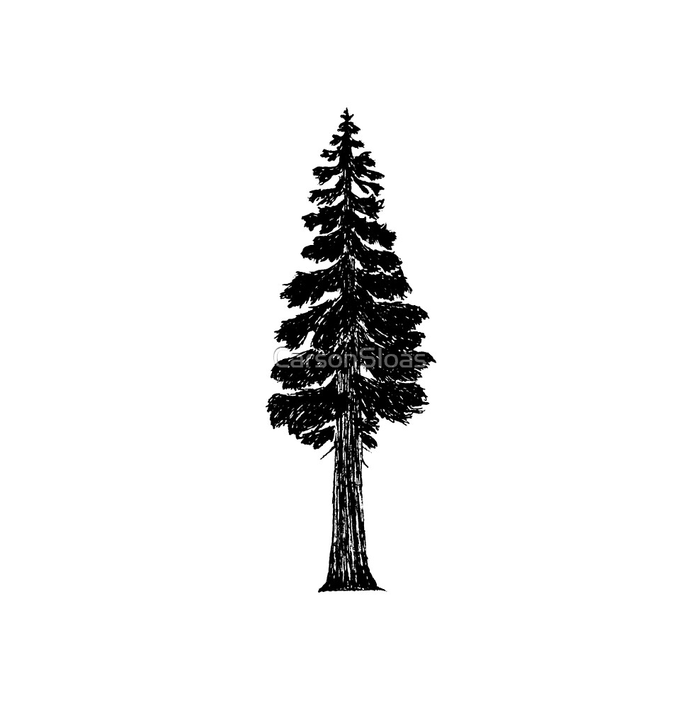Lone Giant Sequoia  by CarsonSloas