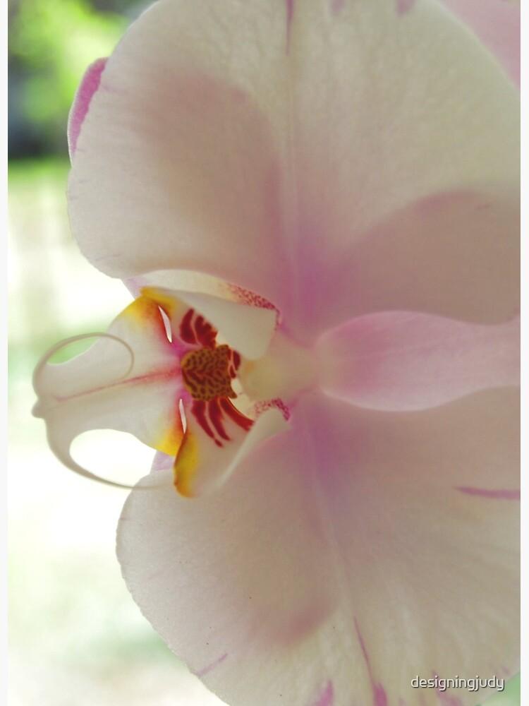 Blushing Bloom by designingjudy