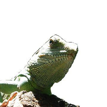 Lizard by mllemaple