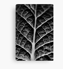 Leaf veins and texture Canvas Print