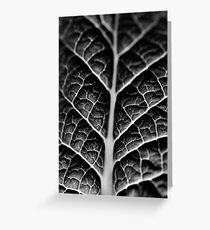 Leaf veins and texture Greeting Card