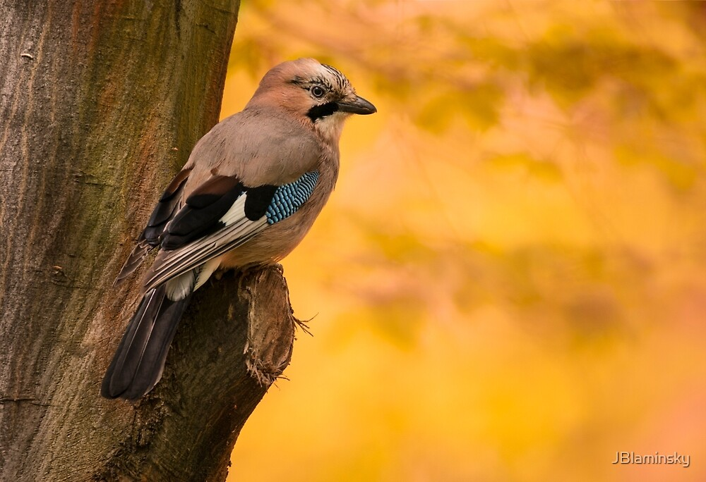 Jay Bird on the tree by JBlaminsky