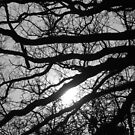 Covered By Trees by Vicki Spindler (VHS Photography)