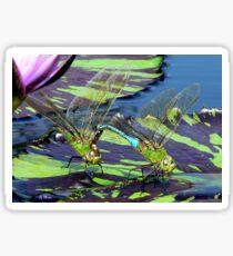 Two Dragonflies on a lily pad Sticker