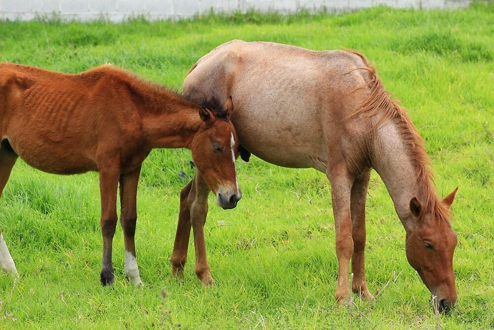 Horses on a Farm by rhamm