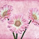 Pretty in Pink by PhotosByHealy