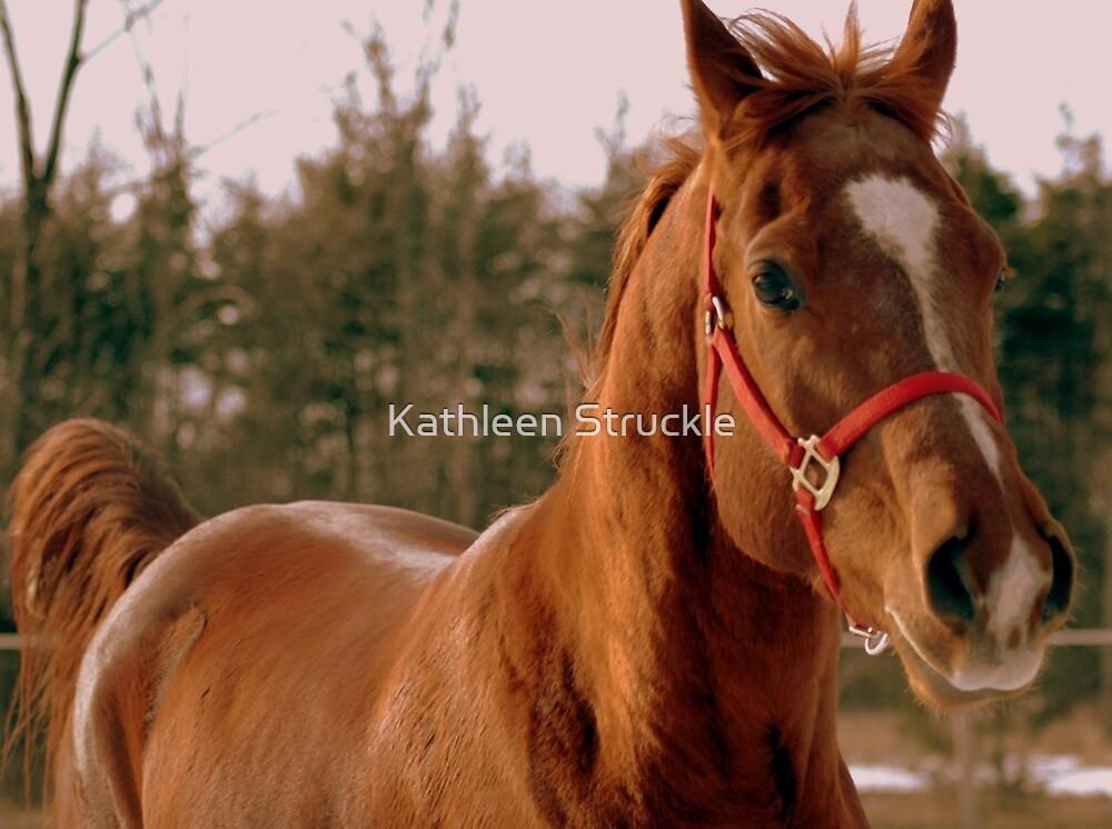 Handsome Horse by Kathleen Struckle