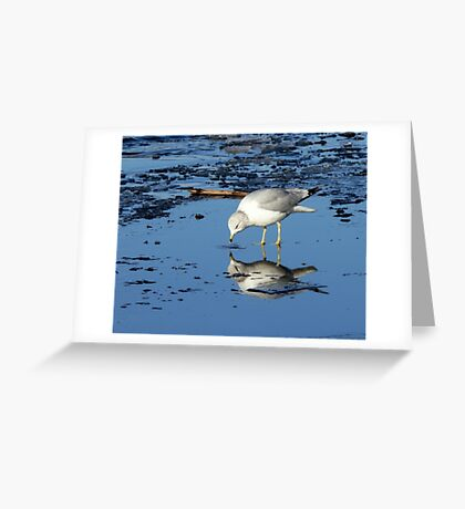 River Gull on Ice Greeting Card
