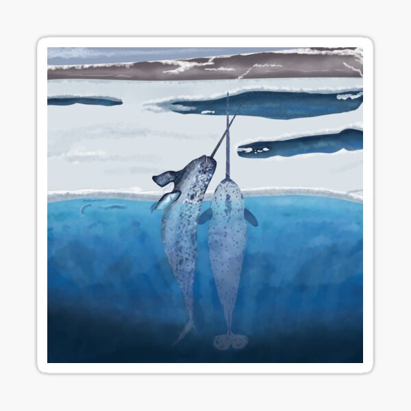 Narwhals emerging from the cold ocean Sticker