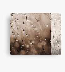 Abstract Grass Water Drop Droplet Nature Grey Gray Canvas Print
