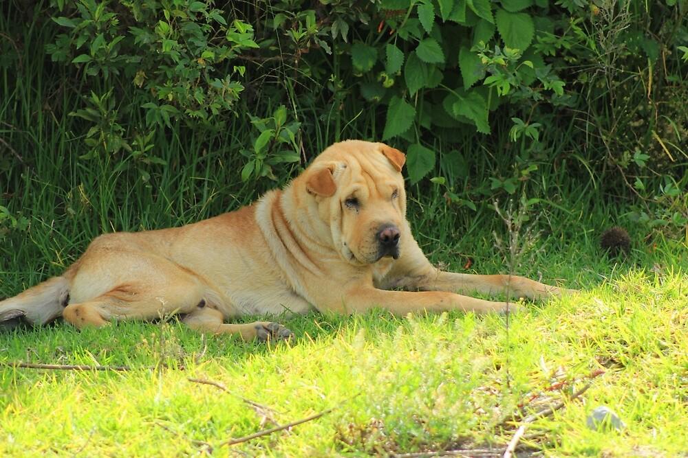 Dog Next to a Bush by rhamm