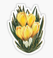 D1G1TAL-M00DZ ~ FLORAL - Crocus by tasmanianartist Sticker