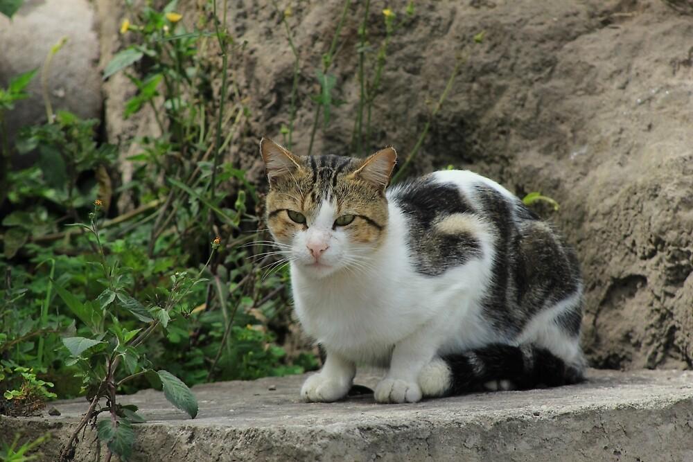 Cat by rhamm
