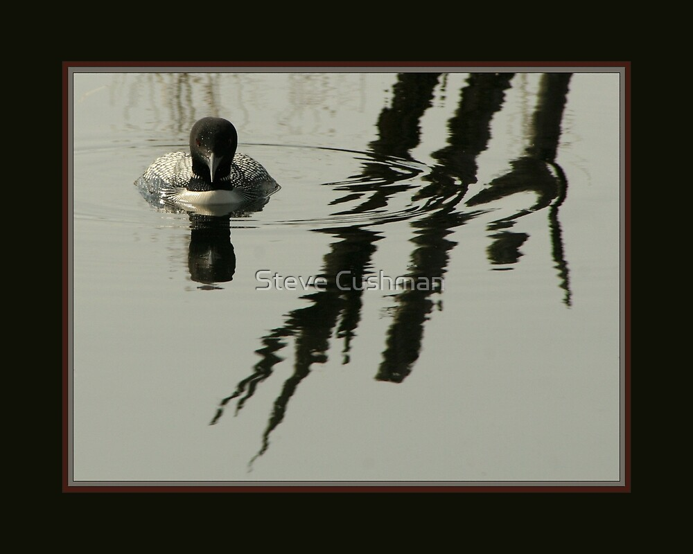 Loon in reflective Pond by Cushman