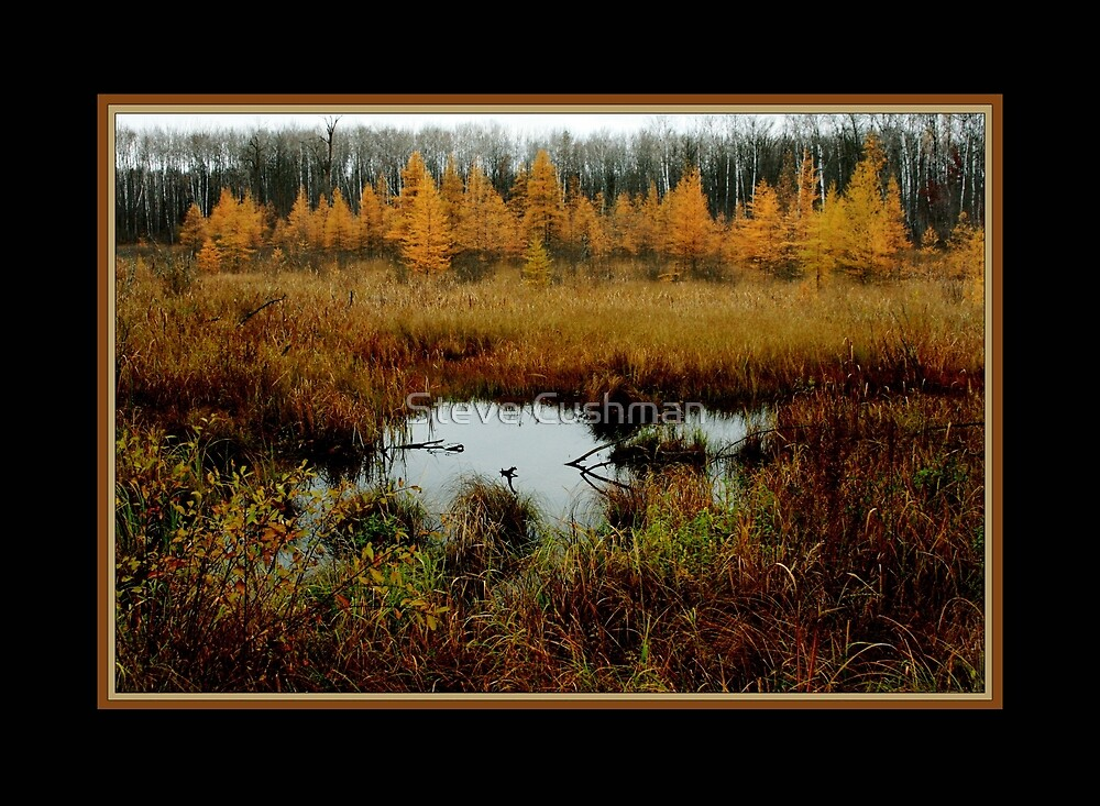 Minnesota's Golden Tones by Cushman