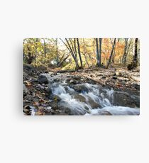 Light in the falls Canvas Print