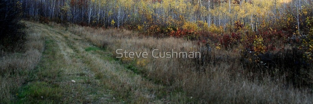 Grouse Hunting Trail in Minnesota by Cushman