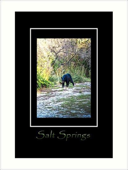 Salt Springs Bear by designingjudy