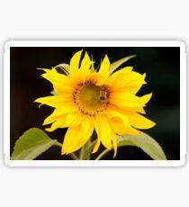 Giant sunflower Sticker