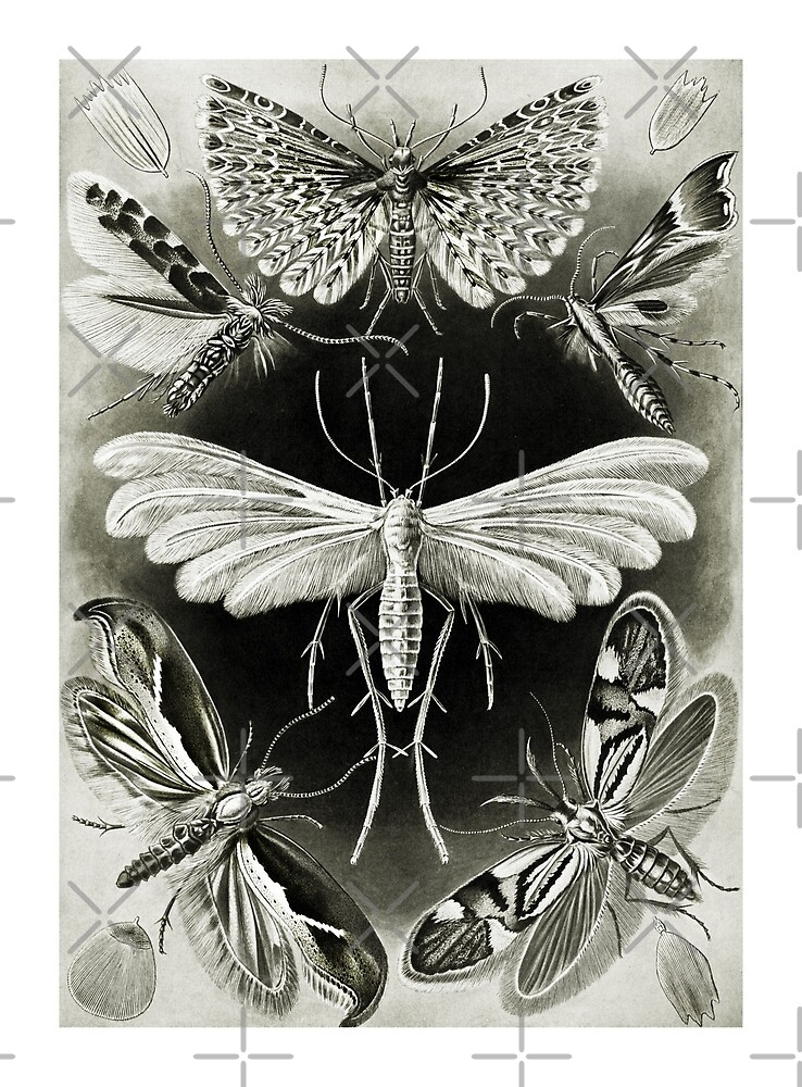Moths in Pale Light by diane  addis