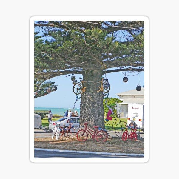 Bicycle tree, Beachport, South Australia Sticker