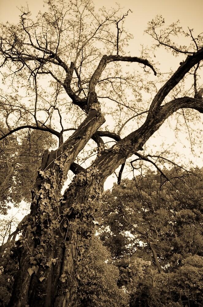 Autumn tree by Andrea Mazzocchetti